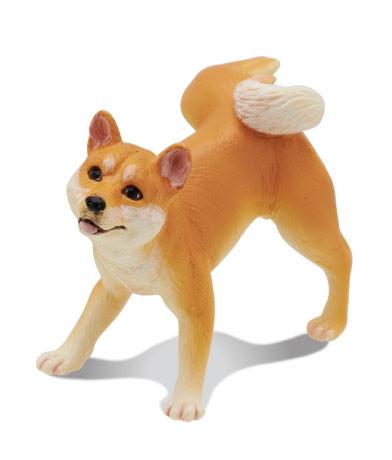 柴犬(赤)
