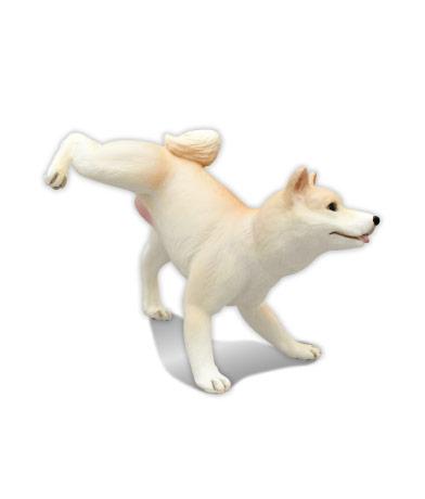 柴犬 (淡赤)